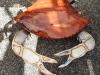 crab-arts-market2016